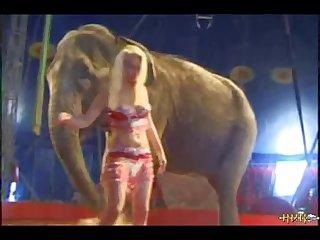 Elephant 2 (part 1)