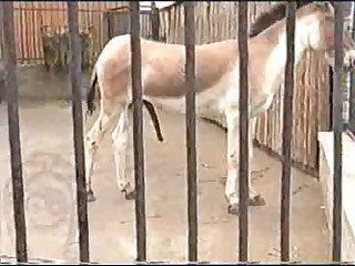 Horse Errect4