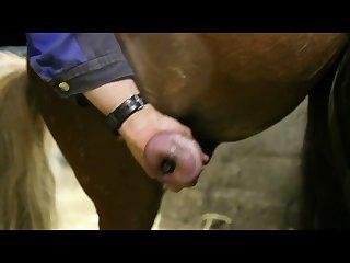 Pony absamen