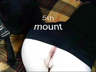 I Used To Be Deep Throating Him Whereas The 3 New Hounds Were Licking Dog Ejaculate From My Pussy